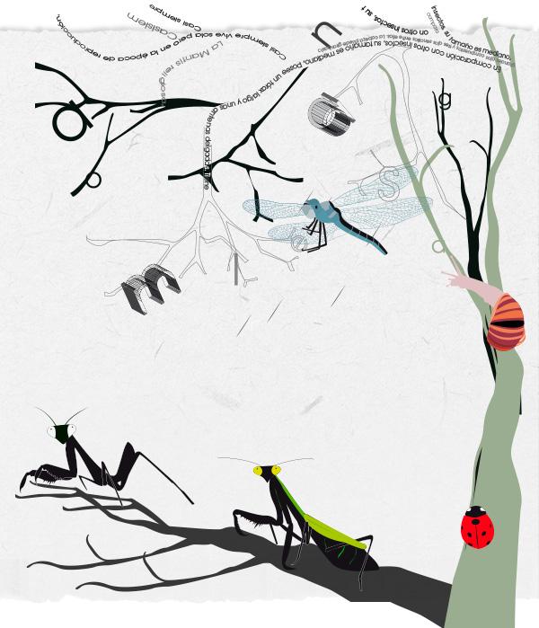 diseño-grafico-anadesign-ilustracion-toledo