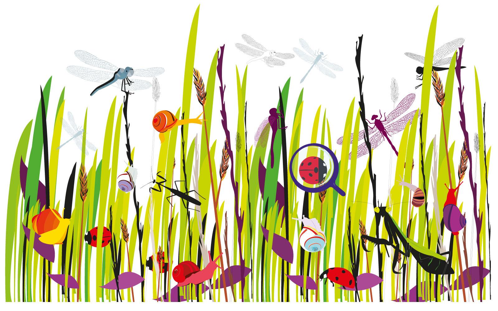 diseño-grafico-en-toledo-ilustracion-anadesign